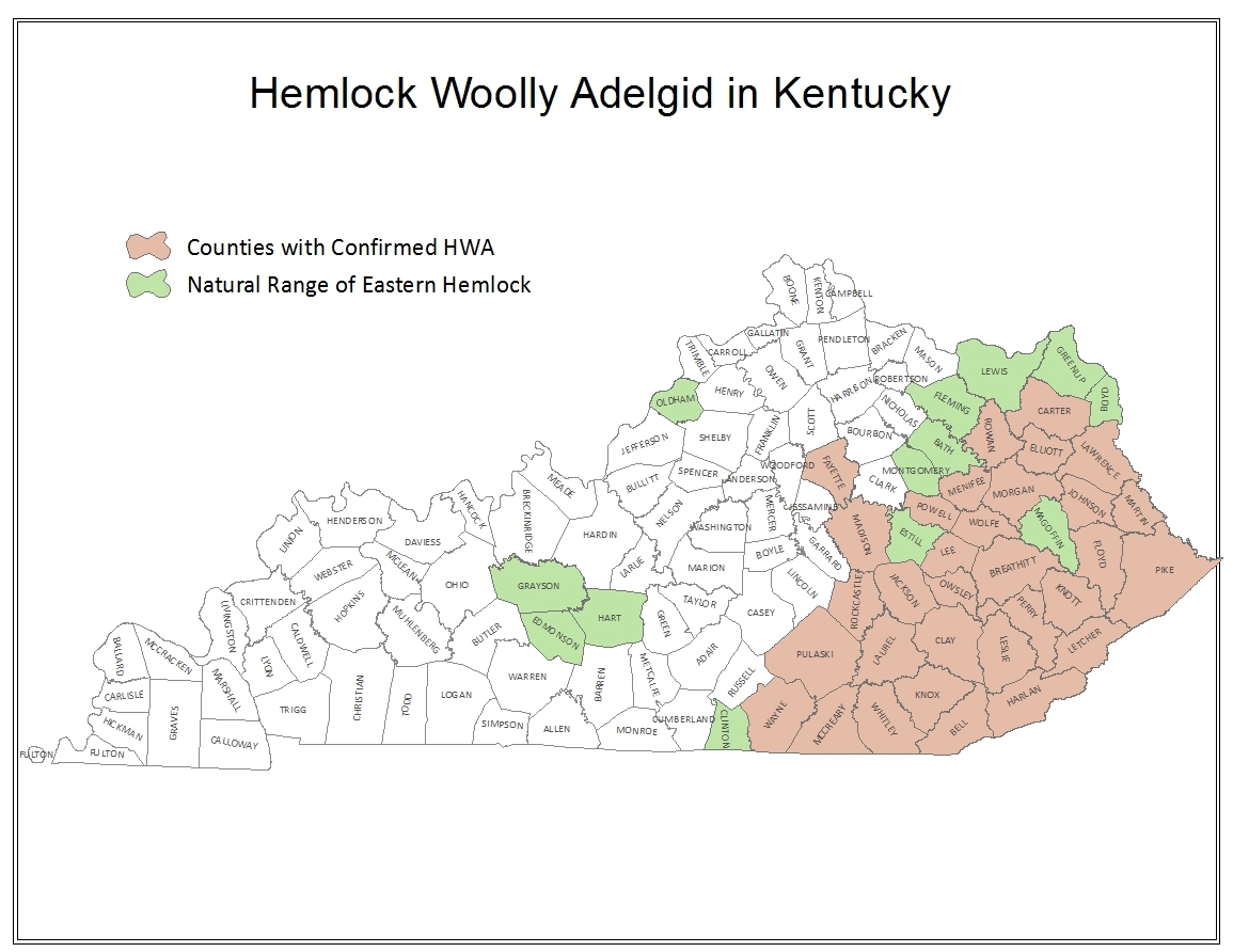 Hemlock Woolly Adelgid Infested Counties