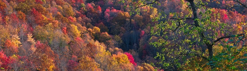 Forest canopy in fall color at Kentenia State Forest from overlook on Kentucky Highway 2010.