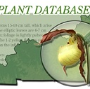 Kentucky Rare Plant Database